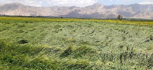خسارت  5 هزار میلیارد ریالی به بخش کشاورزی فارس
