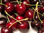 حدود ۲۰ هزار تن میوه هستهدار در  مراغه برداشت میشود
