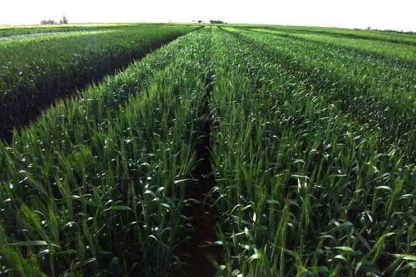 سهم 20 درصدی استان یزد از تولید بخش کشاورزی کشور
