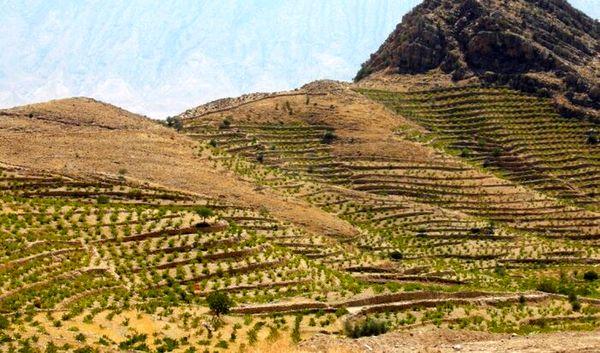 کشاورزی کردستان در مسیر توسعه پایدار