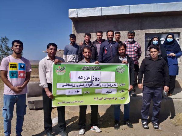 روز مزرعه کلزا در تاکستان برگزار شد
