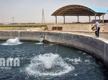 بیش از ۴۱۲۰ تن انواع ماهی در استان قزوین تولید شد
