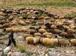 ۴۸۵ هزار راس دام خراسان شمالی از پوشش بیمه ای برخوردارند