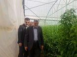 وزیر جهاد کشاورزی از گلخانه سبزی و صیفی در شهرستان پاسارگاد بازدید کرد