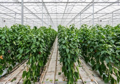 پنج طرح کشاورزی در شهرستان خانمیرزا به بهره برداری رسید