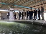 تولید50  میلیون لاروماهیان بومی درمنطقه سیستان
