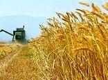 خوزستان قطب تولید محصولات کشاورزی در کشور