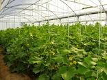 توسعه کاشت گیاهان با مصرف آب کم از جمله توسعه گلخانه ها و کاشت گیاهان داروئی در شهرستان بردسیر