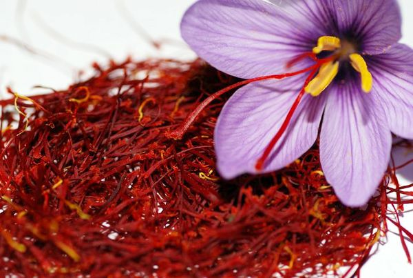 برداشت ۲.۵تن زعفران در یزد