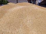 خروج گندم از هشترود قاچاق محسوب میشود