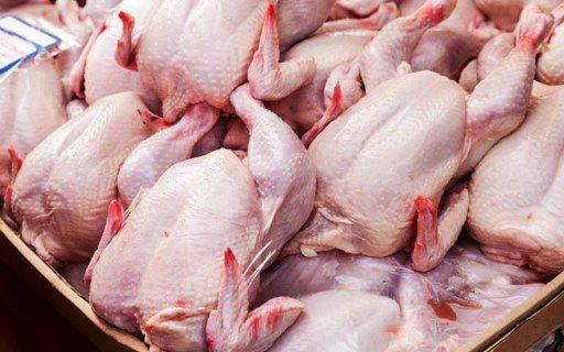 پیش بینی تولید  بیش از 12000 تن گوشت سفید