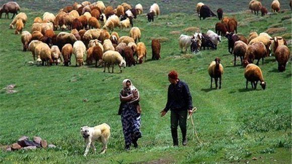محدودیت استقرار عشایر کوچرو در 5 کیلومتری دهلران