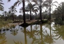 ۱۷۳ میلیون مترمکعب آب بین نخیلات بوشهر توزیع شد