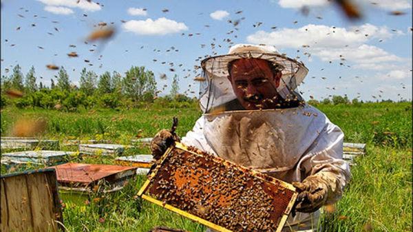 زنبورداران شهرستان سرعین سالانه بیش از 98 تن عسل تولید می کنند