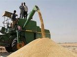 ۳۴۳ هزار تن گندم از کشاورزان کردستانی خریداری میشود