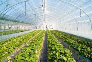 خراسان شمالی استانی پیشرو در کشت محصولات گلخانهای