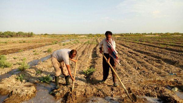 بایدونبایدهای حقوق شهروندان کشاورز