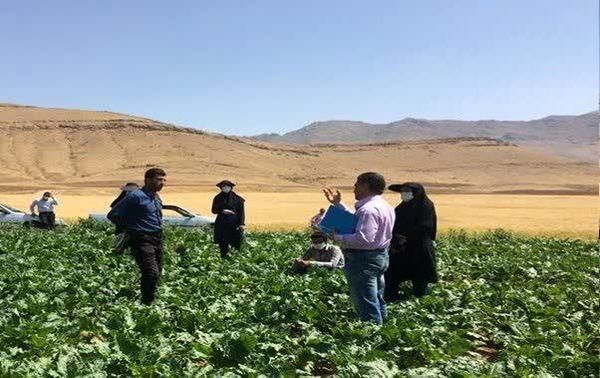 بازدید گروه یاوران تولید از مزارع شهرستان شلمزار