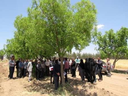 احداث نخستین باغ الگویی متراکم پیوندی عناب در سطح کشور