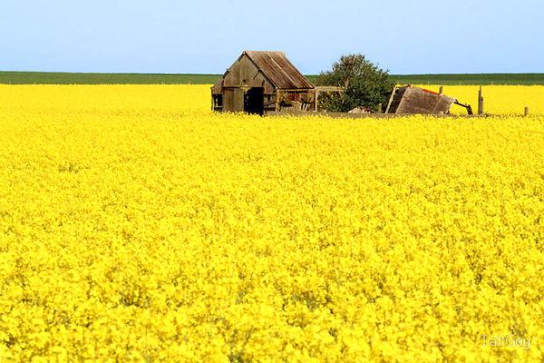ایران در اوکراین دانه روغنی میکارد/ بهکارگیری کشاورزان باتجربه و دانشآموختگان ایران در کشت فراسرزمینی