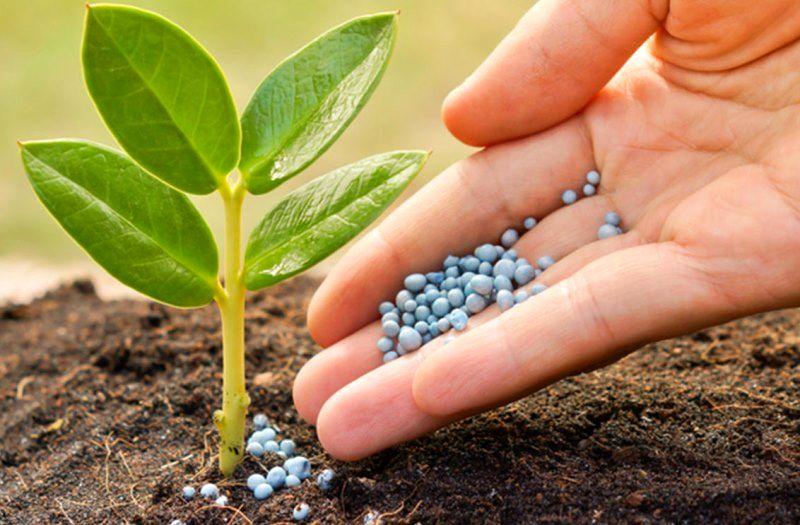 تامین کودهای کشاورزی مورد نیاز کشور از تولیدکنندگان داخلی
