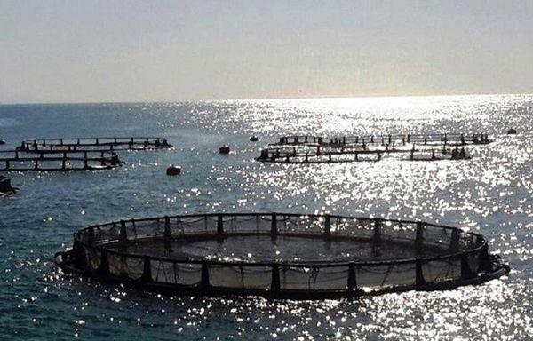 ظرفیت تولید ۷۵ هزارتنی ماهی در دریای خزر
