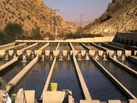 رشد 10 درصدی پرورش ماهی قزلآلا در مزارع سردآبی استان ایلام