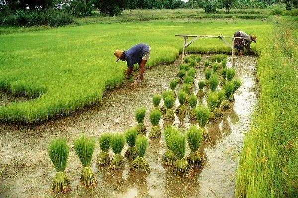 فرصت چند جانبه کشاورزی چین برای کشاورزی استرالیا