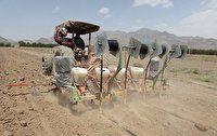 آمادهسازی حدود ۳۶ هزار هکتار از اراضی برای کشت غلات