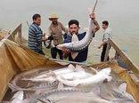 صید تجاری ماهیان خاویاری در سال ۲۰۲۱ ممنوع شد