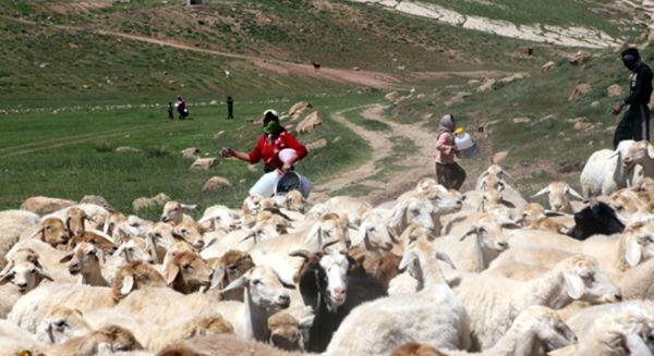 سرمای بهاره کوچ عشایر خراسان شمالی را به تاخیر انداخت