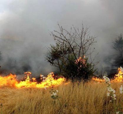 خسارت آتش به منابع طبیعی خراسان شمالی نصف شد
