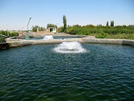 270 تن ماهیان گرمابی و سردابی در واحدهای پرورش ماهی شهرستان آبیک تولید شد