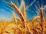 مدیرعامل غله: گندم مهرگان ایلام مرغوب ترین بذر کشور است