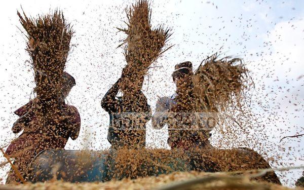 شرکت بین المللی مالی، علاقه مند به سرمایه گذاری در بخش کشاورزی بنگلادش