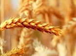 کشاورزی  یکی از ارکان مهم رشد و توسعه اقتصاد کشور در تامین امنیت غذائی کشور است