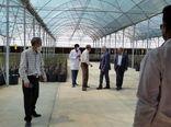 بازدید خاوازی از گلخانه قرنطینه نهال گردو شهرستان بافت
