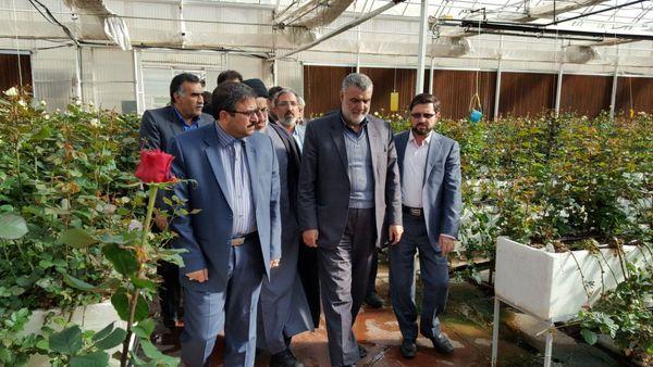 بازدید حجتی از گلخانه پرورش گل رز در بیرجند