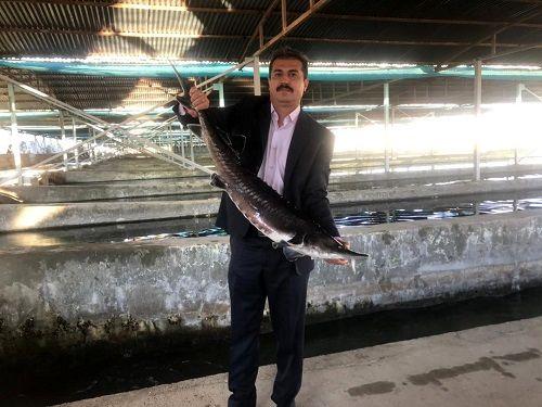 پرورش ماهی ملوسجان نمونه ملی شد