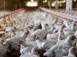 خطر شیوع آنفلوانزای فوق حاد پرندگان با شروع فصل سرما