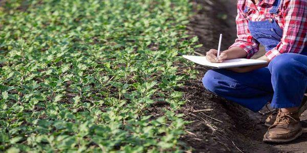 تولید در قالب کشاورزی قراردادی