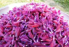 برداشت ۶۰ درصد محصول گل گاو زبان رودسر