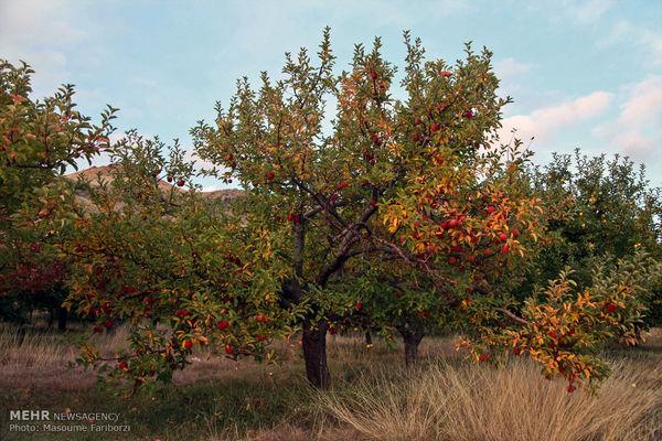 طبیعت پاییزی منطقه ارسباران