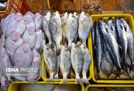 از چالشهای تامین خوراک دام و بچه ماهی تا خرید حمایتی ماهی