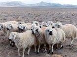 استان مرکزی رتبه سوم در تولید گوشت قرمز در کشور