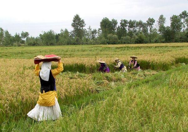 سهم 17.2 درصدی کشاورزی از اشتغال کشور