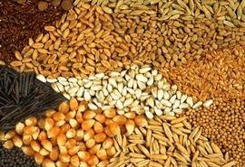 توزیع بیش از ۴۵ هزار تن نهادههای خوراک دام و طیور از ابتدای سال جاری