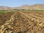 برداشت محصول چغندرقند در بخش هلیلان