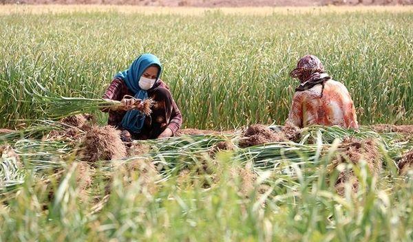 احتمال تغییر سبد غذایی مردم در پی زیان هنگفت بخش کشاورزی