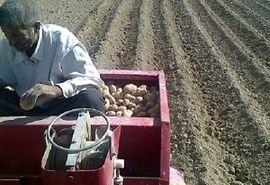 کاشت سیب زمینی طرح استمرار در لارستان آغاز شد